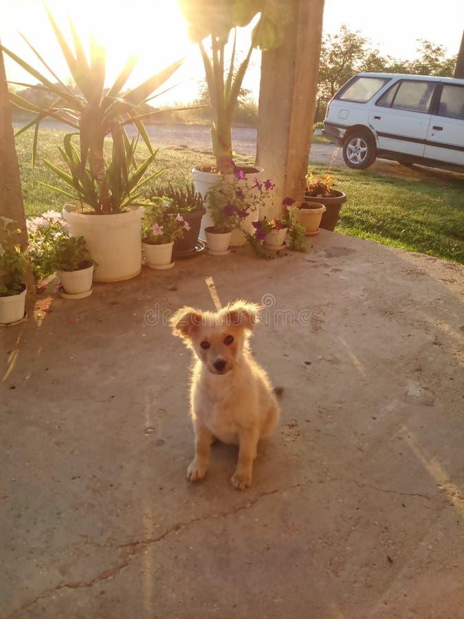 太阳升起,晴朗mornning与逗人喜爱的狗 库存照片