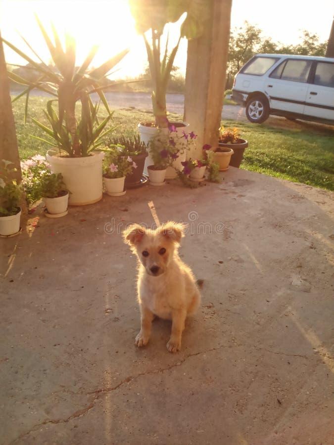 太阳升起,晴朗mornning与逗人喜爱的狗 图库摄影