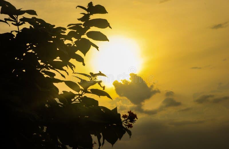 太阳发光与树 图库摄影