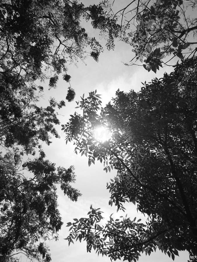 太阳和树 免版税图库摄影