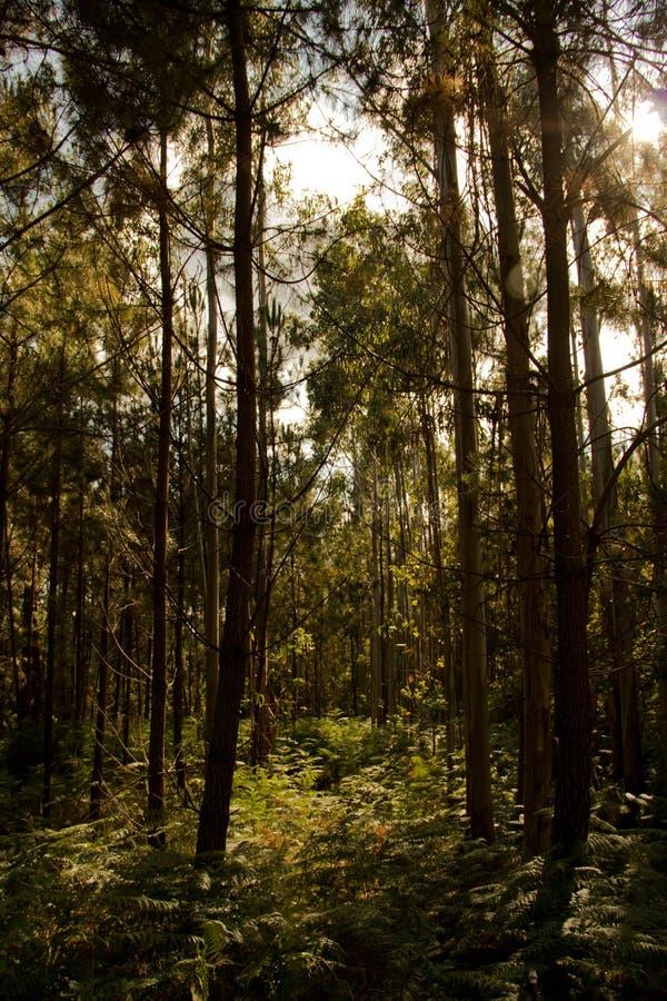 太阳和树 免版税库存照片
