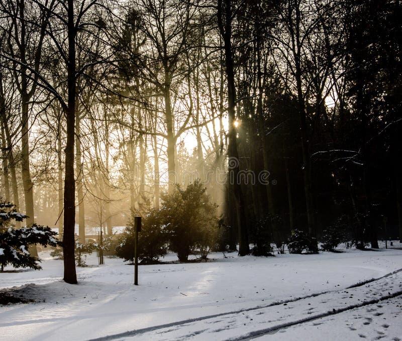 太阳和雪 免版税库存照片
