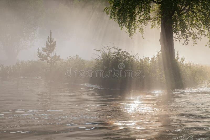 太阳在一条河的一场雾发出光线在一个狂放的森林里 免版税库存图片