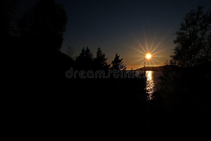 太阳在森林设置了 库存照片