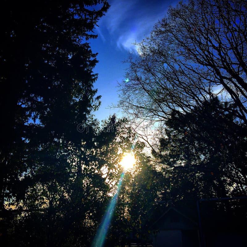 太阳天空树 免版税库存照片