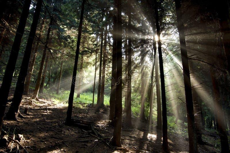 太阳射线 免版税图库摄影