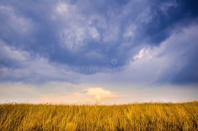 太阳将设置在一个金黄领域,对称地被反对美妙的蓝天 免版税库存图片