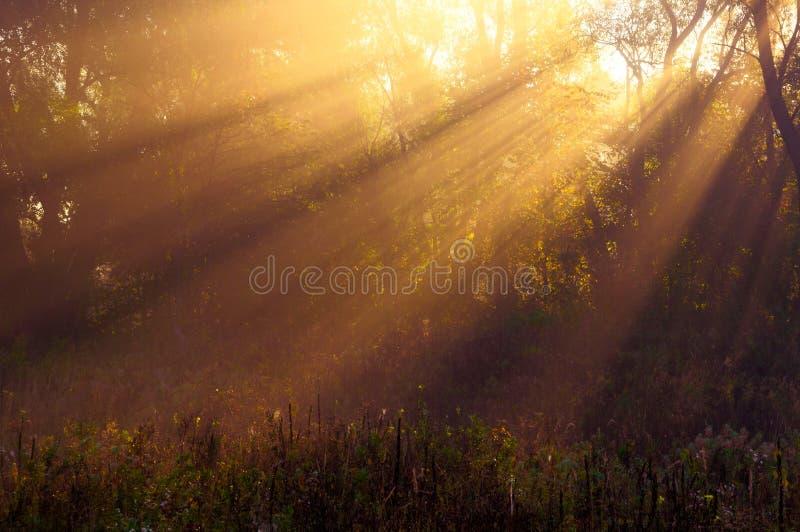 太阳放光周到树和绿色 图库摄影