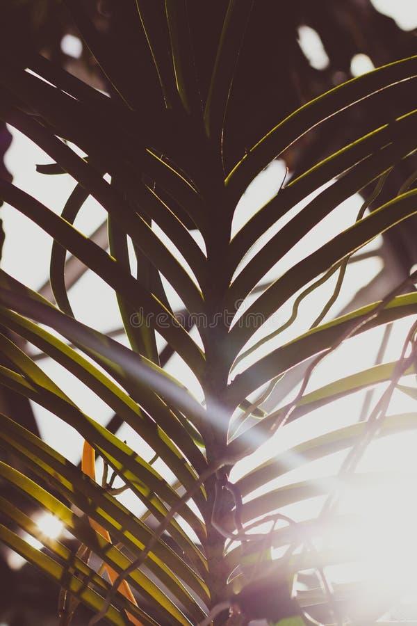 太阳洪水通过由后面照的棕榈叶状体 库存照片