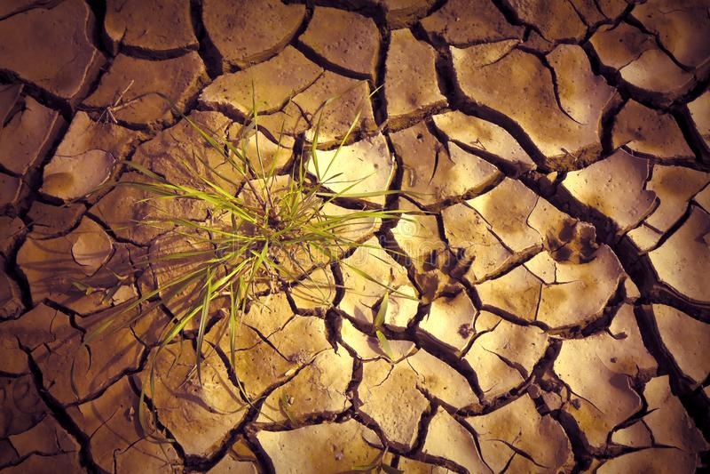 太阳烧的瘠薄土地:饥荒和贫穷概念 库存图片