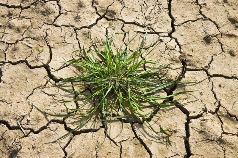 太阳烧的瘠薄土地:饥荒和贫穷概念 库存照片