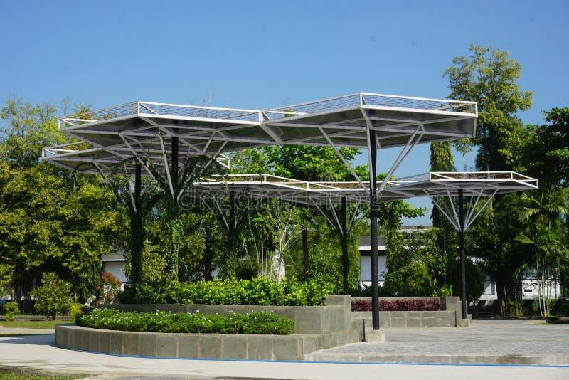 太阳热带绿叶机盖 免版税库存照片