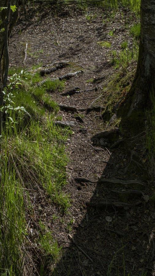 太阳照亮的森林道路 库存照片