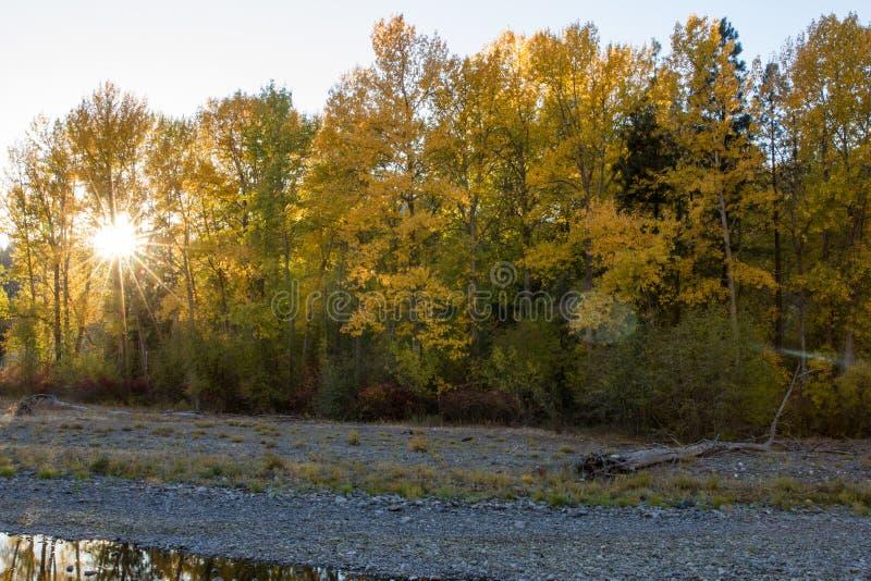太阳爆炸通过秋天上色了沿纳奇斯河的树 免版税库存照片