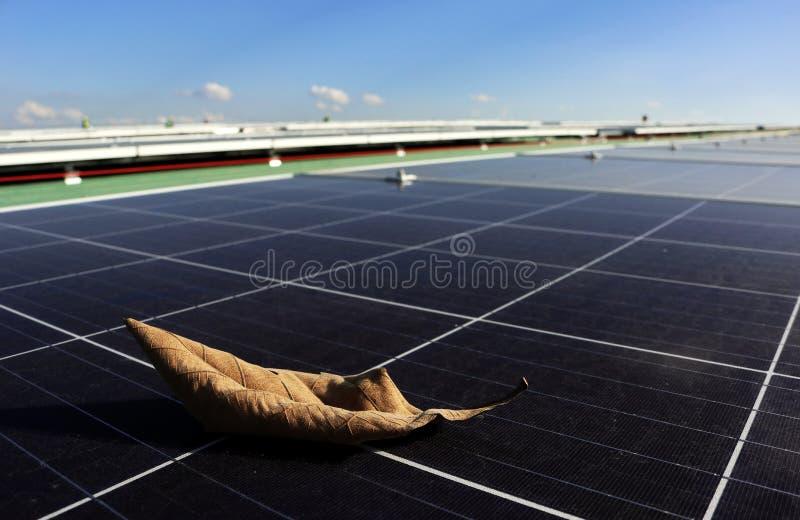 太阳电池板表面上的干燥叶子 库存照片