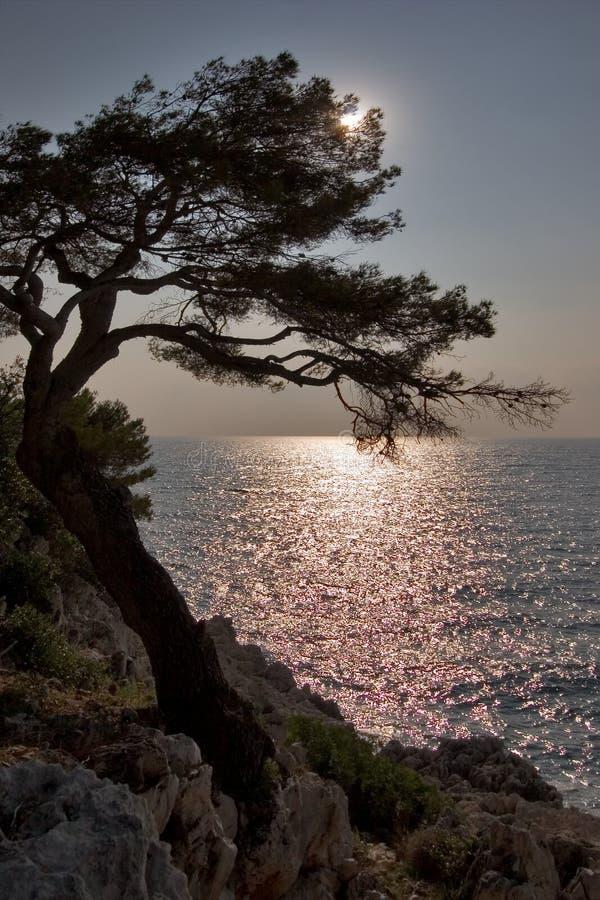 太阳的亮光 库存照片