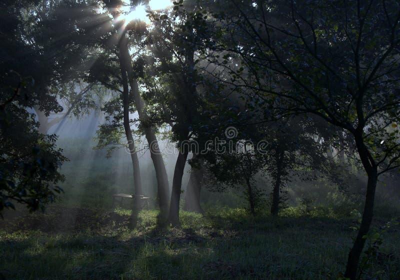 太阳的光芒在森林里 免版税库存图片