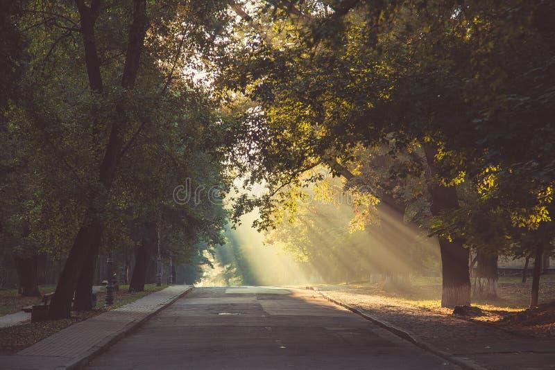 太阳的光芒通过树在路做他们的方式,落 库存照片
