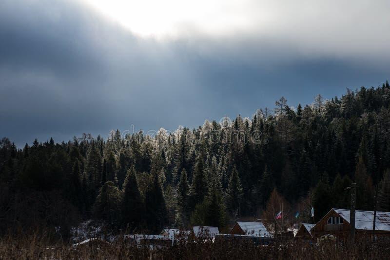 太阳的光芒阐明杉木的上面 库存图片