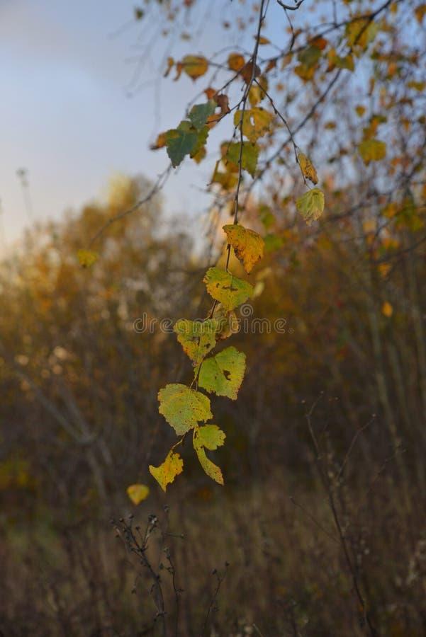 太阳的lasy光芒 库存照片