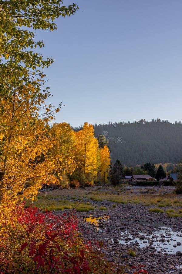 太阳突出秋天上色了沿纳奇斯河的树 图库摄影