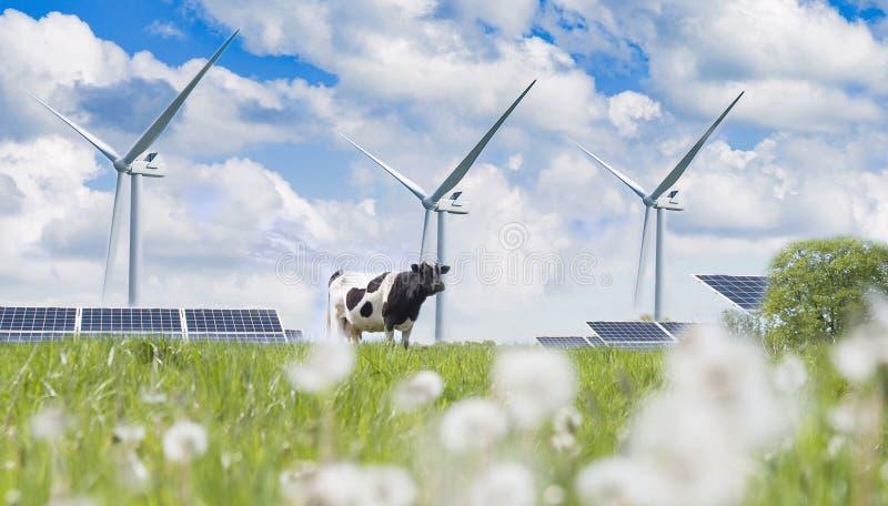 太阳能电池和母牛 免版税图库摄影