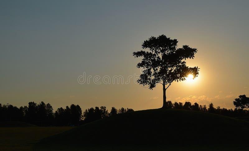 太阳设置了与一棵树 库存图片