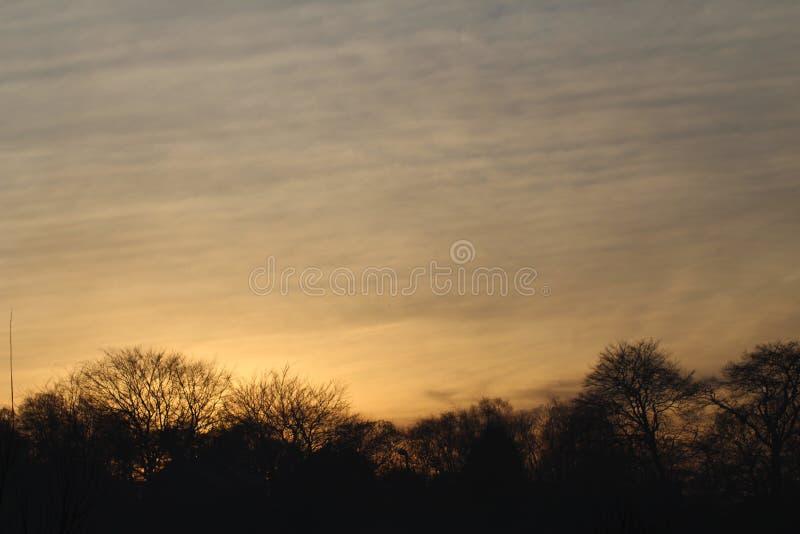 太阳设置了在森林 免版税库存图片