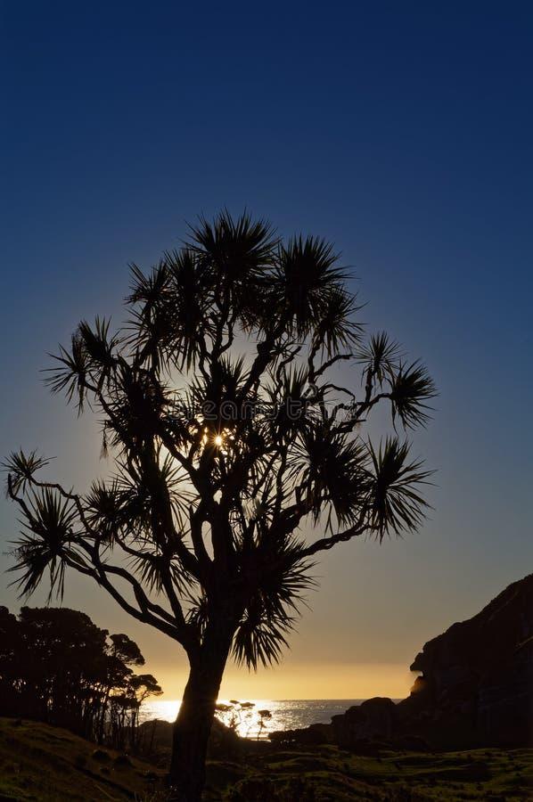 太阳设置在圆白菜树后和在海洋,西海岸,新西兰 库存照片