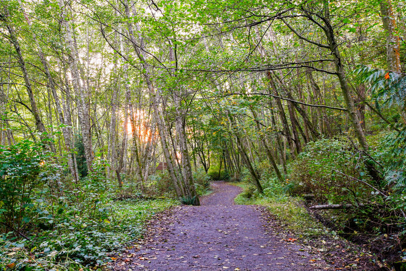 太阳通过在供徒步旅行的小道的林冠层发出光线过滤器 库存图片