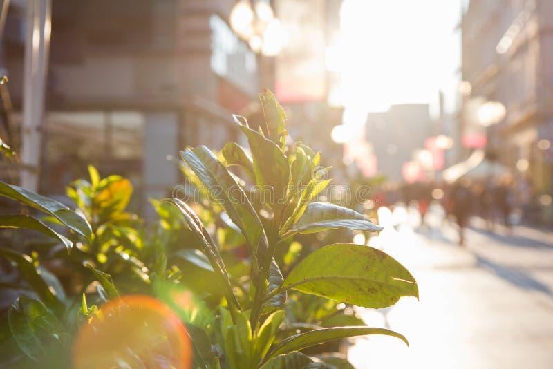 太阳通过绿色叶子发光在拥挤街道 库存照片