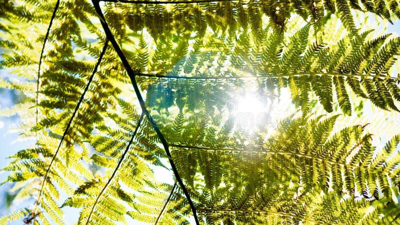 太阳通过蕨 库存图片