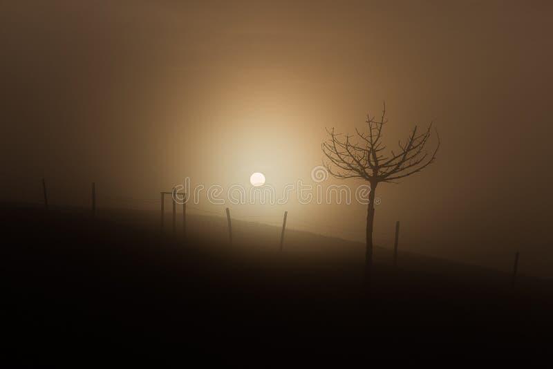 太阳通过雾 免版税库存图片