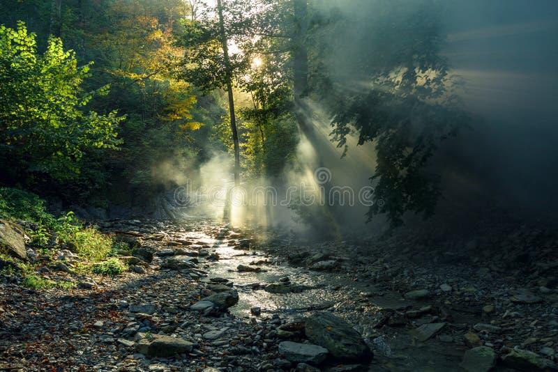太阳` s光芒通过早晨薄雾做他们的方式反对山河和森林美丽如画的森林l的背景 免版税库存图片