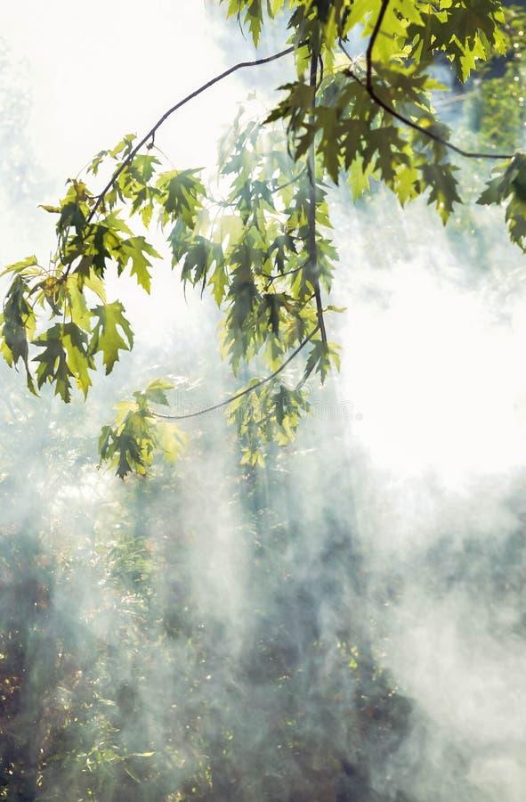 太阳` s光芒通过树和烟击穿 自然 免版税库存图片