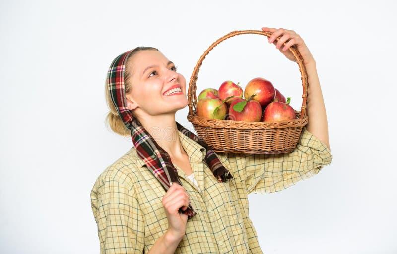 夫人农夫花匠怎么知道厨师许多食谱用苹果 厨师食谱概念 妇女村民运载自然的篮子 库存照片