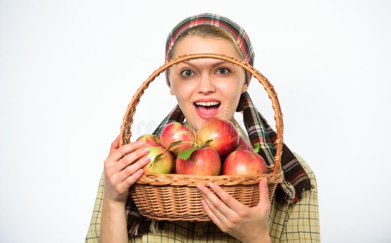 夫人农夫花匠感到骄傲为她的收获妇女花匠土气样式举行篮子用在白色背景的苹果 图库摄影