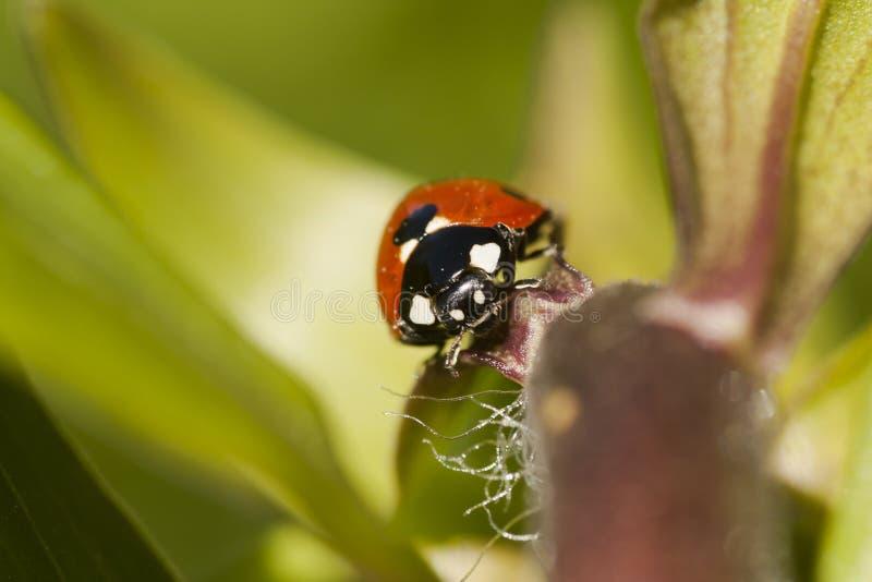 Download 夫人出价 库存图片. 图片 包括有 前面, 传送带, 河床, 夫人, 小点, 瓢虫, 昆虫, 双翼飞机, 本质 - 62539057