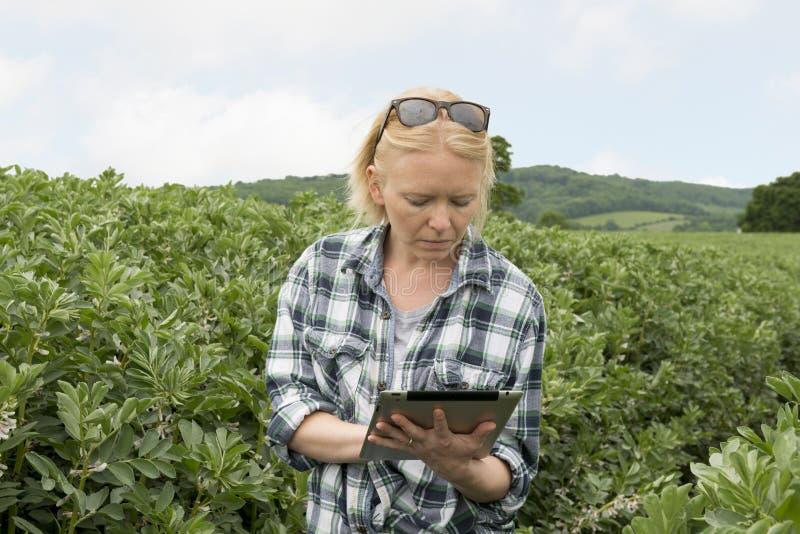 夫人在农场在她的移动设备` s屏幕上严重凝视 库存图片