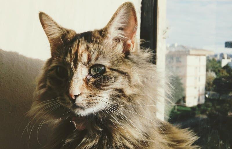 夫人猫 库存图片