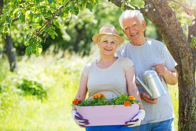 夫妇从事园艺的前辈 免版税库存图片