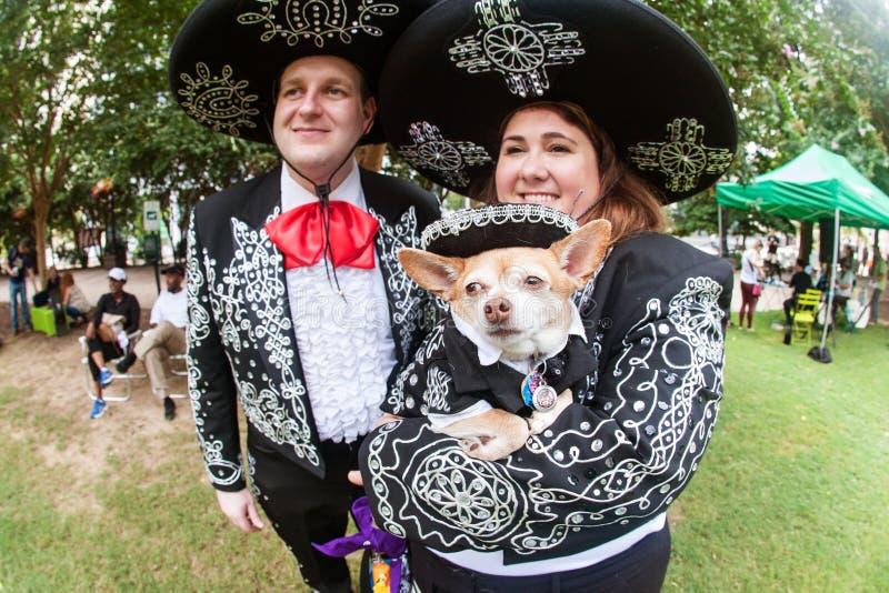 夫妇和他们的奇瓦瓦狗穿戴墨西哥流浪乐队打扮在小狗骗局 免版税图库摄影