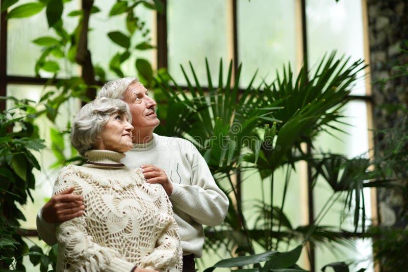 夫妇在绿色热带庭院里 库存图片