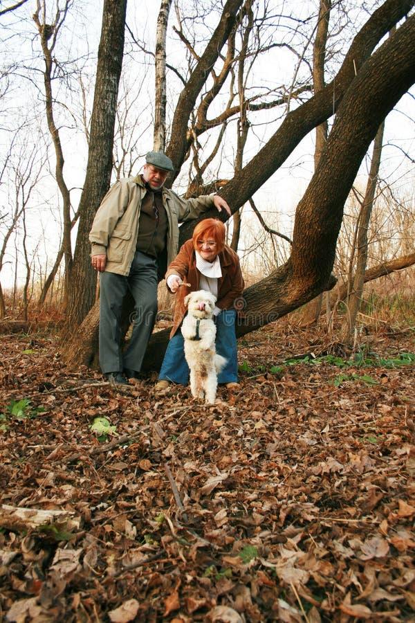 夫妇森林 免版税库存图片