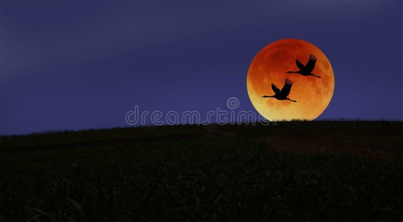 夫妇通过红色月亮大蚊在晚上 图库摄影
