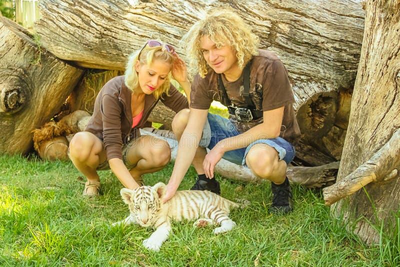 夫妇touchs白色老虎 免版税库存图片