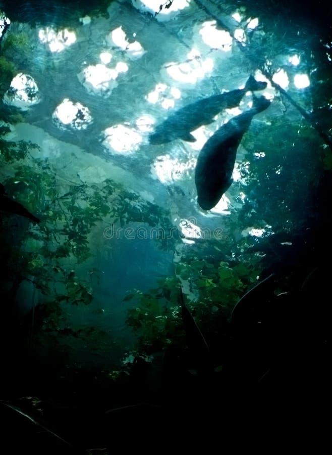 失去的水下的城市 免版税库存图片