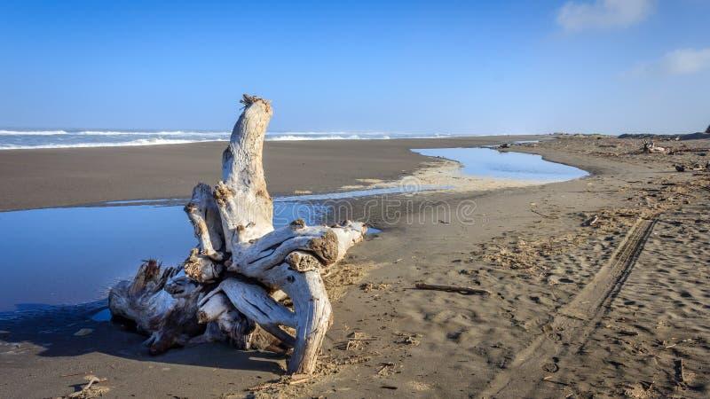 失去的海岸海滩视图 库存照片
