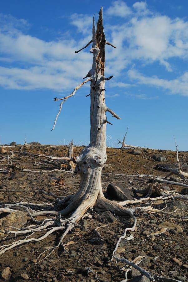 失去的结构树 免版税库存图片