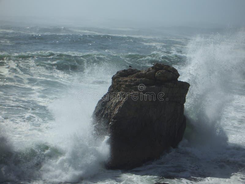 失败岩石海鸥挥动 免版税库存图片